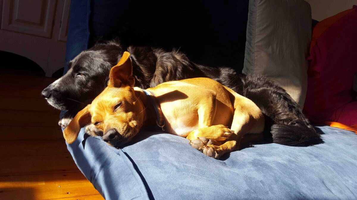 Two dogs lying down together on a cushion in the sun